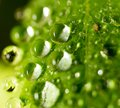 Dew drops on a green leaf Royalty Free Stock Photo