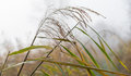 Dew drops hanging at a seed head of reed closeup droplets water and spider silk on on misty day in the fall season Stock Photography