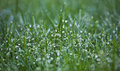 Dew drops macro on fresh green grass Stock Images