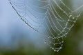 Dew drops on spider web Stock Photography
