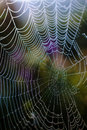 Dew drops on a spider web shiny dark background Royalty Free Stock Photography