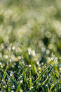 Dew drops in sprin on a meadow spring bavaria Royalty Free Stock Photo