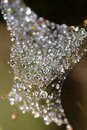 Dew drops in  a web of spider Royalty Free Stock Images