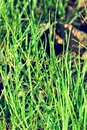 Dew drops on a young green grass Royalty Free Stock Photo