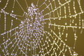 Dew filled spiders web Stock Image