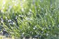 Dew on grass in spring morning Stock Photos