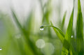 Dew on green grass droplets of fresh Stock Photography