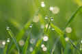 Dew on green grass droplets of fresh Stock Photo