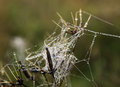 Dew on a spider web wet the grass close up Stock Photos