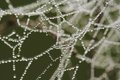 Dew on a spiderweb drops of the Stock Image