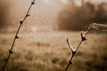 Dew on spiderweb sepia color toned image autumn concept Royalty Free Stock Photography
