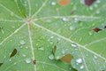 Dew or water drops on green leaf Royalty Free Stock Photo