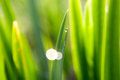 Dewdrop Stock Images