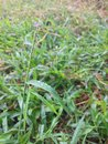 Dewdrop on grass in the morning Stock Photography