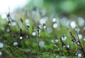 Dewdrop on grass in the morning light Stock Images