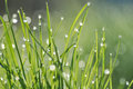 Dewdrop on grass in the morning light Stock Photography