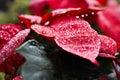 Dewdrop on leaf at phu tabberk phetchabun thailand Royalty Free Stock Photo