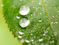 Dewdrop selective focus on the in the middle Royalty Free Stock Photo