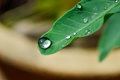 Dewdrop of water falling from green leaf Royalty Free Stock Photos