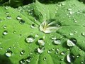Dewdrops Stock Image