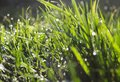 Dewdrops on the grass detail of green with sparkling Royalty Free Stock Photos