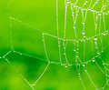 The Dewdrops on a  spider web Royalty Free Stock Photo