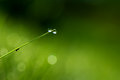 Dews little drop on grass leaf Royalty Free Stock Photo