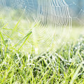 Dewy grass and dewy spider net Stock Image