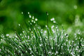 Dewy green grass blur background Royalty Free Stock Image