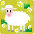 Dheep little sheep on a meadow Stock Photo