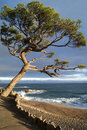 Diagonally raised tree and sea Royalty Free Stock Photos