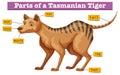 Diagram showing parts of tasmanian tiger Royalty Free Stock Photo