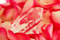 Diamond on petals Royalty Free Stock Photo