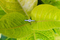 Diamond wedding ring a on a leaf Royalty Free Stock Image