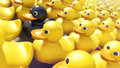 Difference black rubber ducky unique among yellow rubber duckies Stock Photo