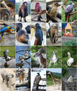 Different animals collage Royalty Free Stock Photo