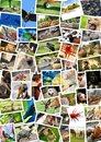 Different animals collage on postcards Royalty Free Stock Photo