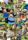 Different animals collage on postcards Royalty Free Stock Photos