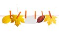 Different autumn leaves and empty card hang on a rope isolated the white Stock Photography