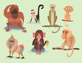 Different breads monkey character animal wild zoo ape chimpanzee vector illustration. Royalty Free Stock Photo