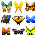 Different butterfly with abstract decorative pattern graphic summer free fly present silhouette and beauty nature spring