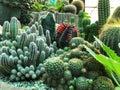 Different of cactus , Cactus farm