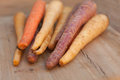 Different colored fresh picked assorted carrots Royalty Free Stock Photo
