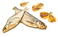 Different fish appetizer closeup on white background Royalty Free Stock Images