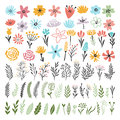 Different florals elements for your design project. Vector illustration of plants