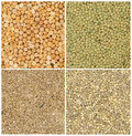 Different grains Stock Images
