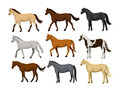 Different Horses Set in typical coat colors: black, chestnut, dapple grey, dun, bay , cream, buckskin, palomino , tobiano paint pa