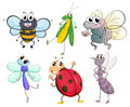 Different insects illustration of the on a white background Royalty Free Stock Image