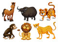 Different kinds of four legged animals illustration the on a white background Stock Images