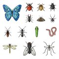 Different kinds of insects cartoon icons in set collection for design. Insect arthropod vector symbol stock web Royalty Free Stock Photo